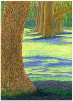 Trees in the Park