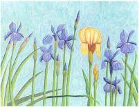 Irises - A German in Siberia