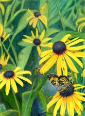 Black-Eyed Susans and Friend